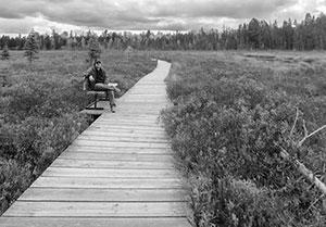 Spruce Bog Boardwalk Trail 360°