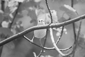 Warbler Calisthenics
